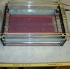 Photo of electrophoresis gel tray